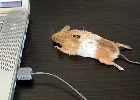 какая должна быть настройка мыши